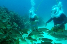 $493 en vez de $998 por sea trek en Los Cabos con Cabo Expeditions - Groupon